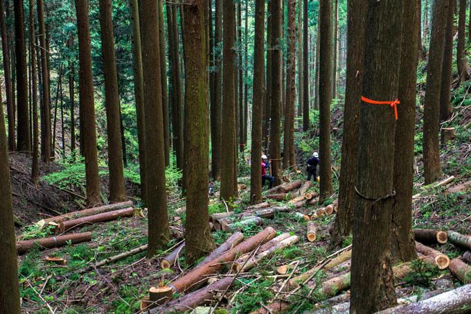 薪の販売 相模原市 間伐材